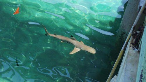 Snorkelling Bersama Baby Shark di Pulau Payar, Langkawi